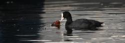Schwimmen können Alle